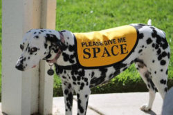 dog jacket yellow Give Me Space