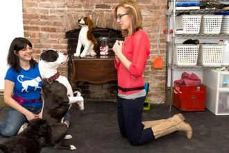 kate senisi dog trainer school for the dogs