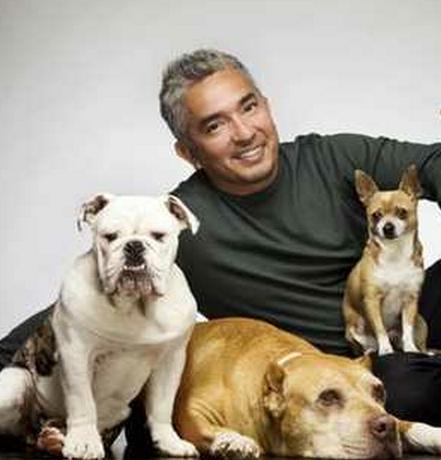 Dog Whisperer Uk Cesar Millan